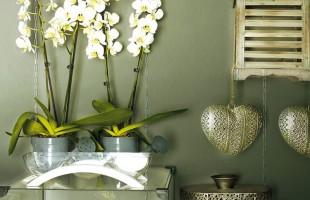 Декоративная краска на основе гашеной извести, известковая краска CEBOART PINTURA